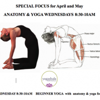 wed anatomy focus $12